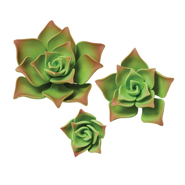 Image of   Grønne gumpaste sukkulenter sæt med 12.